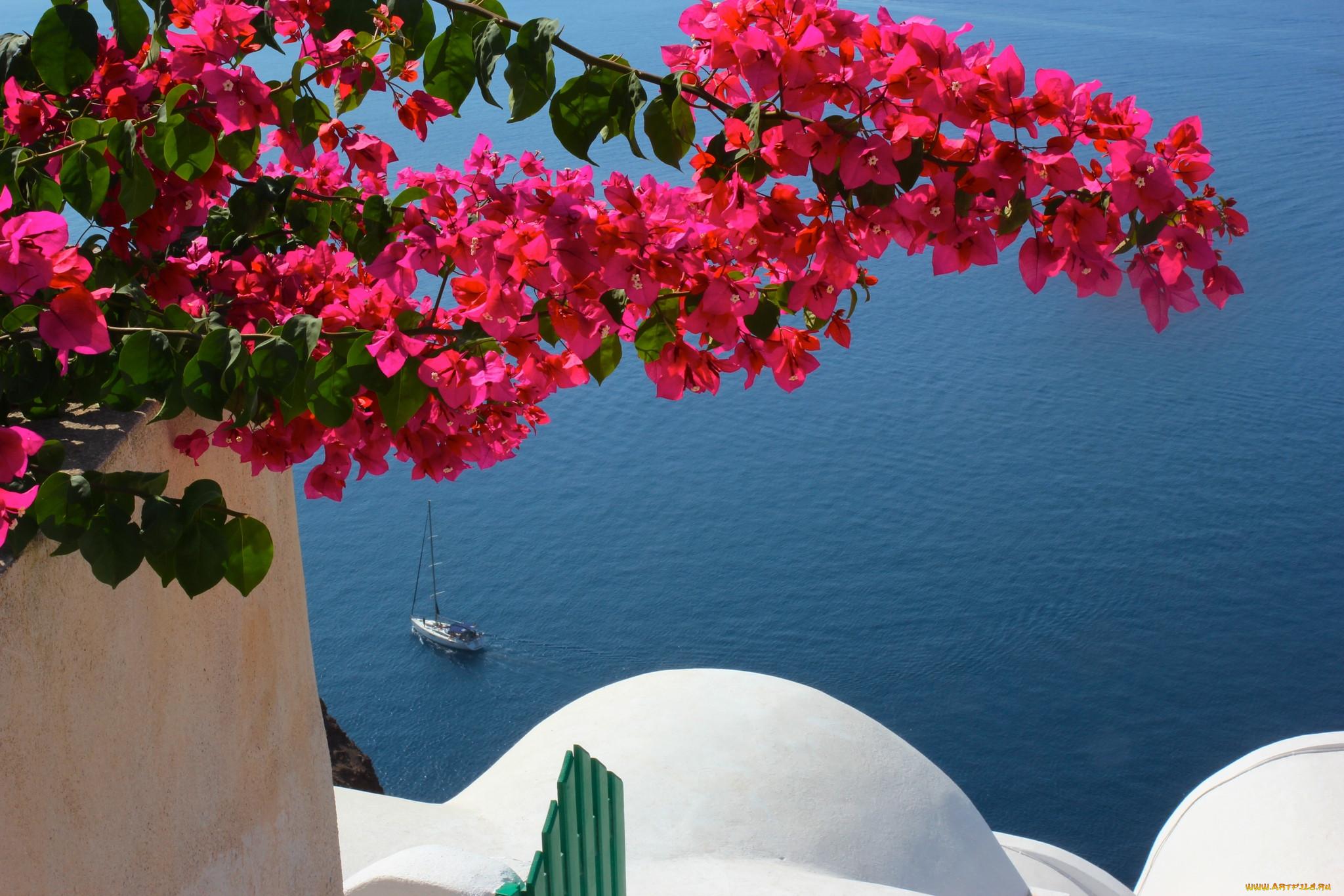 картинки на рабочий стол цветы греции варан